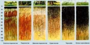 Вертикальное строение различных типов почв